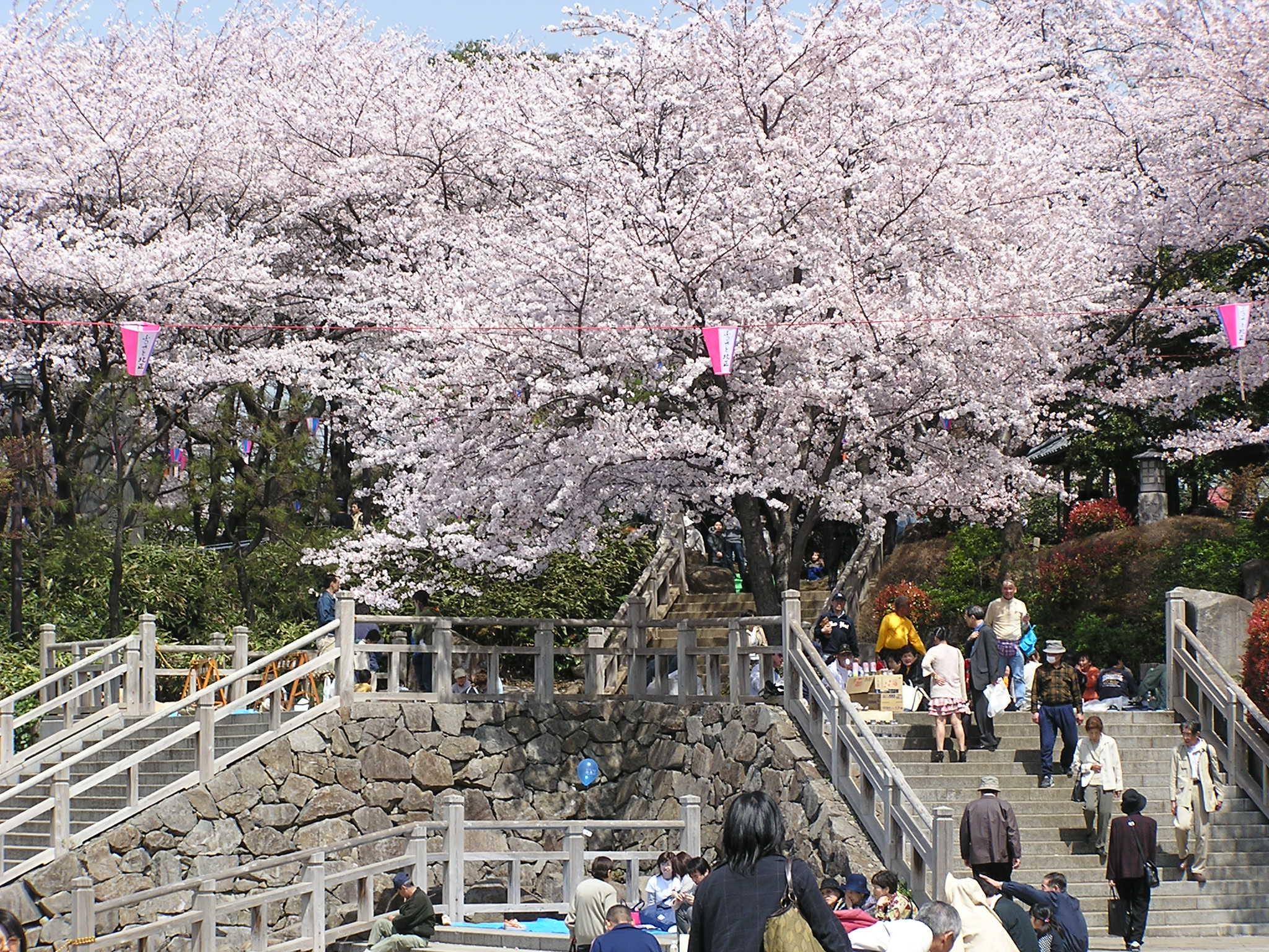 すべての折り紙 鶴 折り紙 : 飛鳥山公園の桜東京都北区に ...